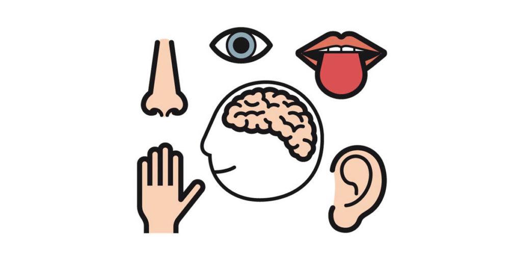 Sinne-Wahrnehmung